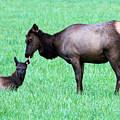 Elk's Bath Time by Jennifer Robin