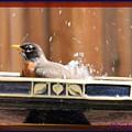 Bath Time by Wendy Fox