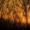 Batik Sunset by Cheryl McClure