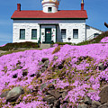 Battery Point Lighthouse In Crescent City by Rick Pisio