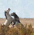 Battle In The Bush by Dennis Hammer