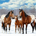 Bay Appaloosa Horses In Winter Pasture by Crista Forest
