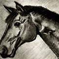 My Friend The Bay Horse by Jose A Gonzalez Jr