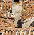 Bazaar View by Bob Phillips