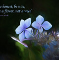 Be A Flower by Bill Posner