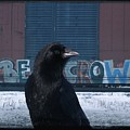 Be Crow by Gothicrow Images