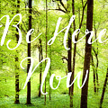 Be Here Now Green Forest In Spring by Matthias Hauser