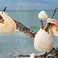 Beach Art - Seashell Shrine - Sharon Cummings by Sharon Cummings