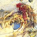 Beach Art by Susan Baker