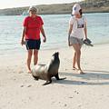 Beach  At Santa Fe Island In Galapagos by Marek Poplawski