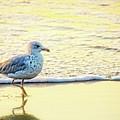 Beach Bird by Debbie Nobile