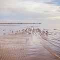 Beach Birds by Joan McCool