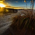 Beach Bush by Michael Thomas