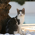 Beach Cat by Gaile Griffin Peers