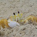 Beach Crab In Sand by Randy Steele