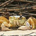 Beach Crab by Robert Och