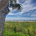 Beach Days by Noel Adams