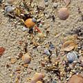Beach Deposit by Tim Sevcik