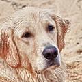 Beach Dog by Linda Pulvermacher