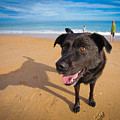 Beach Dog by Michael Clubb