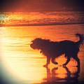 Beach Dog by Paul Topp