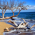 Beach Driftwood Fine Art Photography by James BO Insogna