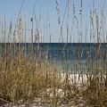 Beach Dune by Anthony Totah