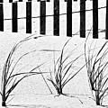 Beach Fence by John Illingworth