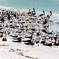 Beach Flock by Marilee Noland