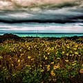 Beach Flowers by Joseph Hollingsworth