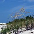 Beach Grass 3 by Evelyn Patrick