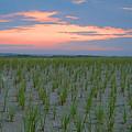 Beach Grass Farm by  Newwwman