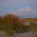 Beach Grass I I by  Newwwman