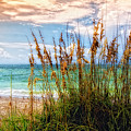 Beach Grass II by Gina Cormier