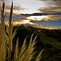 Beach Grass by Patrick  Flynn