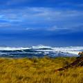 Beach Grass by Renita Confer
