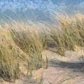 Beach Grass by Russ Harris
