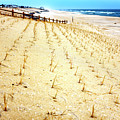 Beach Haven Dune Angles At Long Beach Island by John Rizzuto