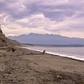 Beach On Dungeness Spit by NaturesPix