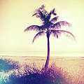 Beach Palm Summer by Chris Andruskiewicz