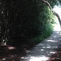 Beach Path by Joey Bridges