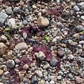 Beach Pebbles by Kathleen Moore Lutz