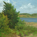 Beach Pines by Phyllis Tarlow