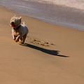 Beach Puppy by Susan Vineyard