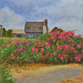 Beach Roses And Cottages by Phyllis Tarlow
