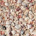 Beach Seashells by Carol Groenen