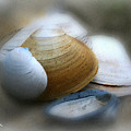 Beach Shells by Linda Sannuti