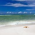 Beach Splendour by Janet Fikar
