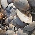 Beach Still Life IIi by Christiane Schulze Art And Photography