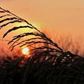 Beach Sunset by Carolyn Marshall